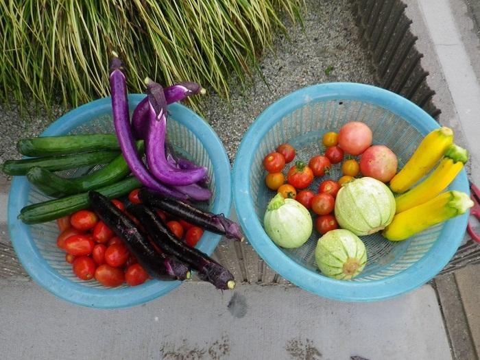 収穫17_07_05