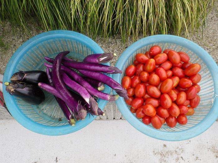 収穫2_17_07_09