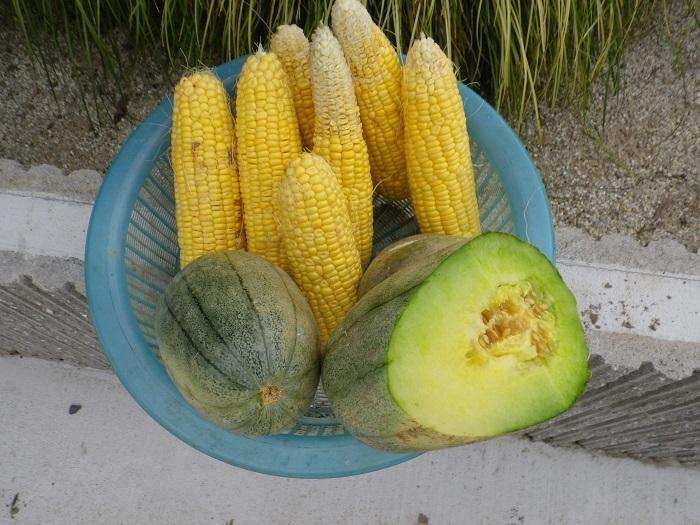 収穫4_17_07_09
