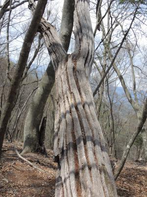 2017.04.奈良倉山