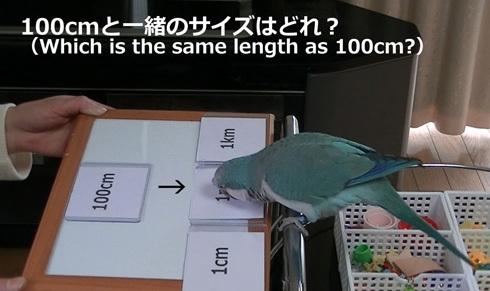 長さの単位1_4
