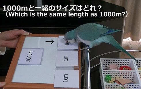 長さの単位1_5