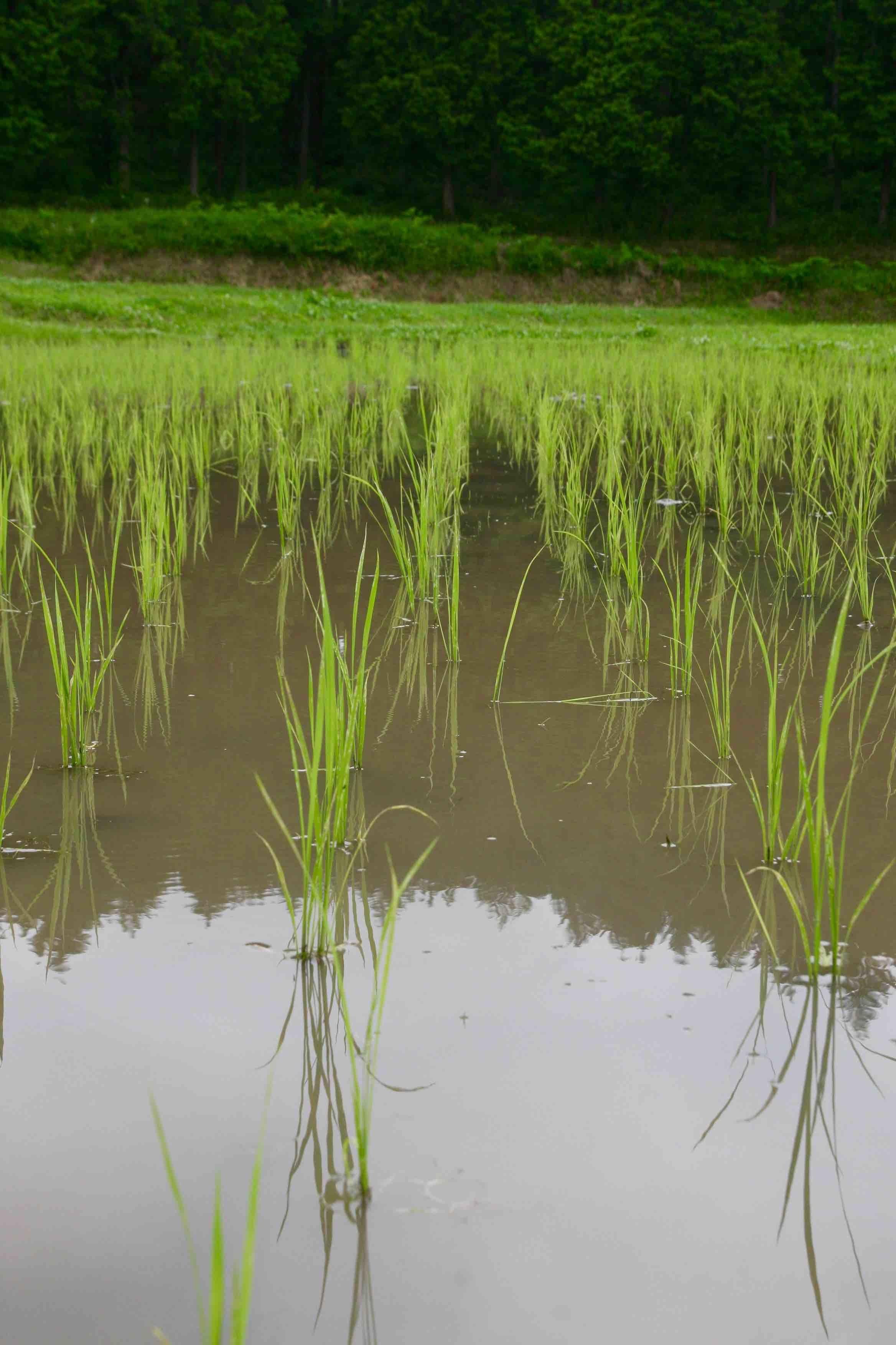 稲作技術検討会(中通り) 2