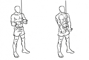 Triceps-pushdown-1-horz_20170525053156d6b.jpg