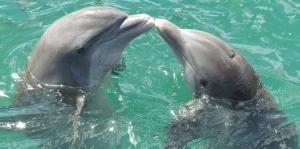 dolphin-1974975__340.jpg