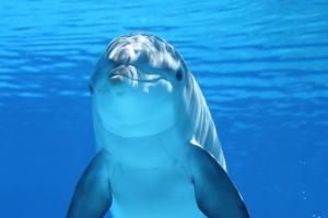 dolphin-203875_960_720_20170602055404d28.jpg