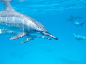 dolphin-806358__340.jpg
