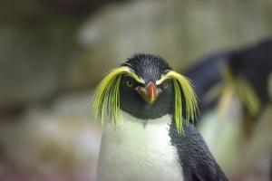 penguin-2104173__340.jpg