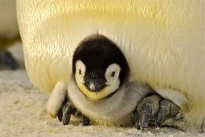 penguin-429125__340.jpg