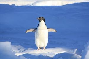penguin-56101_960_720.jpg