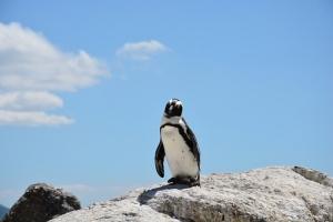 penguin-657527__340.jpg