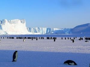 penguins-429136__340.jpg