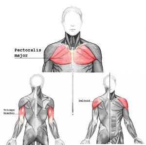 pushmuscle_20170527111132811.png