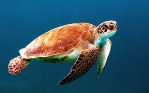 turtle-863336_960_720.jpg