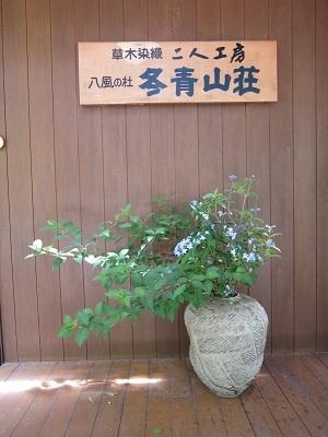 17.6.13☀黒文字・山アジサイ-1