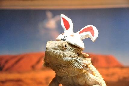 0110ウサギ帽4