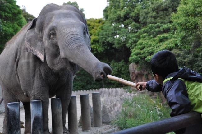 0610象さん