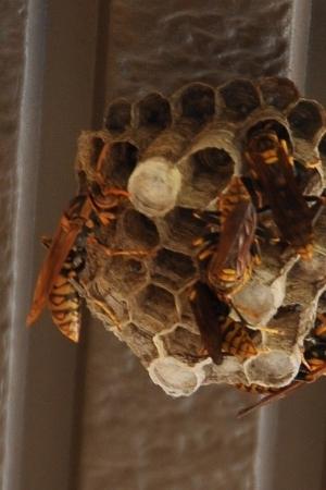 0622蜂の巣2