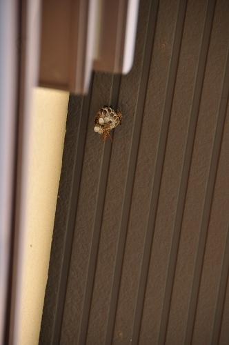 0622蜂の巣3