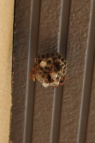 0622蜂の巣1
