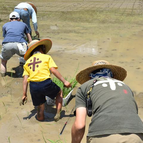 ふたば自給農園(石岡市菖蒲沢)で行われた田植えイベント