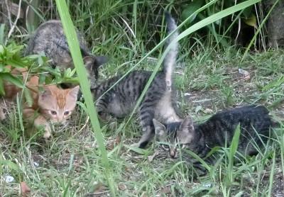 170428-舟渡池公園の親子ネコ-2