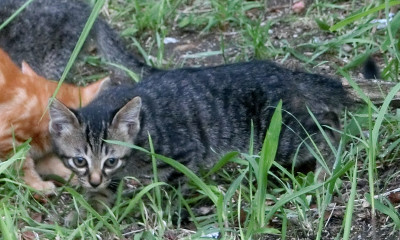 170428-舟渡池公園の親子ネコ-3