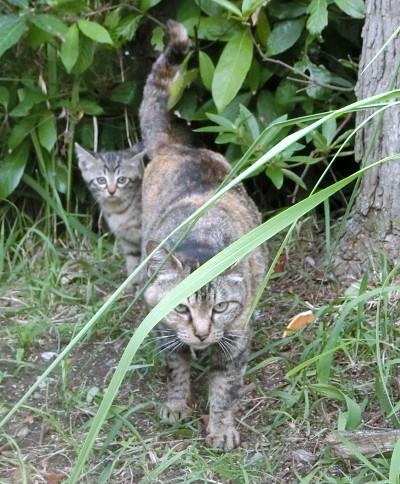 170428-舟渡池公園の親子ネコ-1