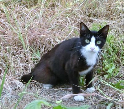 170504-舟渡池公園のネコ-1