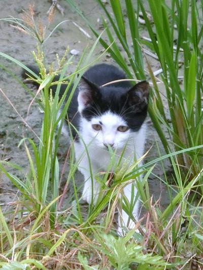 170504-舟渡池公園のネコ-2