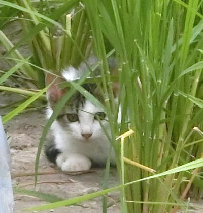 170504-舟渡池公園のネコ-5