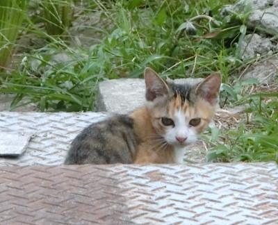 170504-舟渡池公園のネコ-6