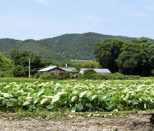 170707-徳島の風景-1