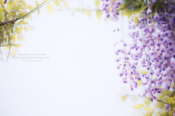 _MG_0607.jpg