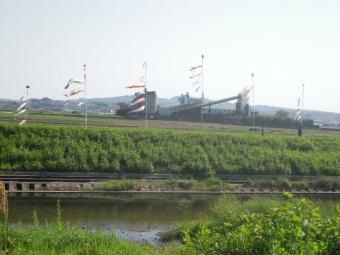 鈴川沿いの鯉のぼり170430