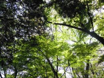 新緑と日の光170502