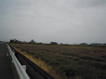 ヤビツ峠170503
