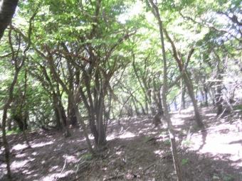 北尾根登山道-1-170522