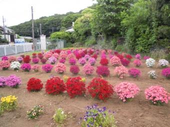 曲がり角の花170524