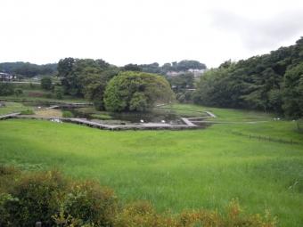 厳島湿生公園170606