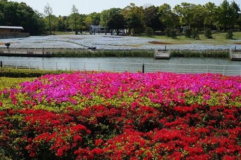 40浜名湖ガーデンパーク2
