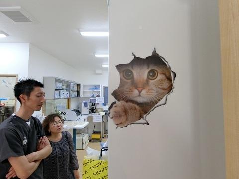 動物病院シール猫大