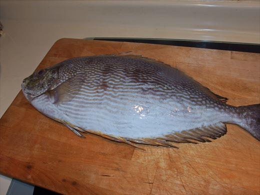 jawarabbitfish.jpg