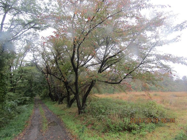 緑に中の桜2