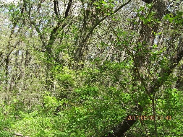 緑に中の桜3