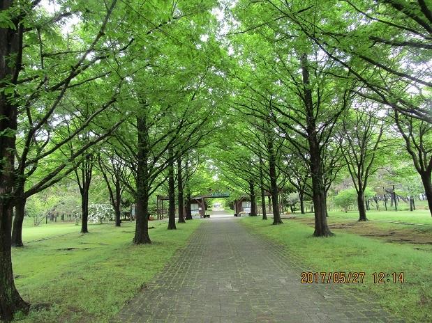 生態系公園8