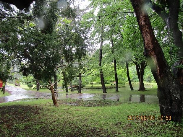 雨の松林1
