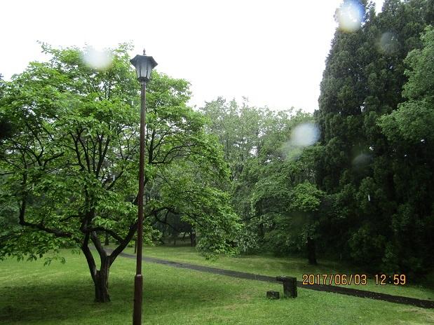 雨の松林3