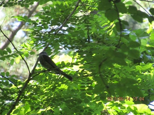 森の中の鳥