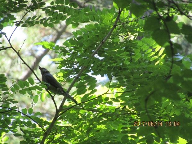 森の中の鳥2